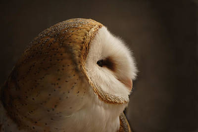 Owls Photograph - Barn Owl 3 by Ernie Echols