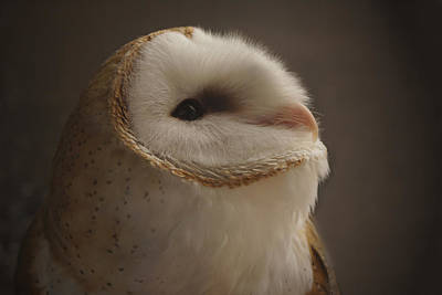 Photograph - Barn Owl 4 by Ernie Echols