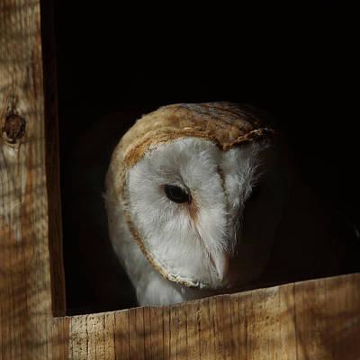 Photograph - Barn Owl 5 by Ernie Echols