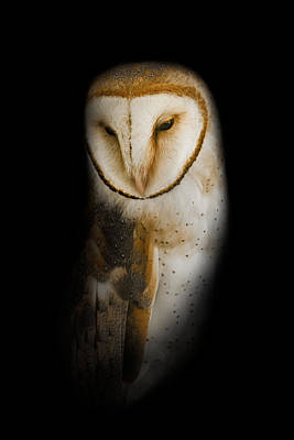 Screech Owl Photograph - Barn Owl by Bill Wakeley