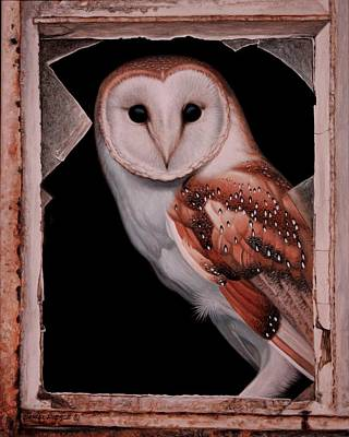 Daniel Pierce Painting - Barn Owl by Daniel  Pierce