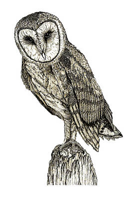 Art Print featuring the digital art Barn Owl by David Blank