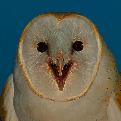 Barn Owl Digital Art Art Print