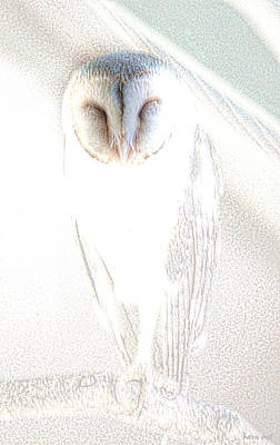 Print featuring the photograph Barn Owl by Holly Kempe