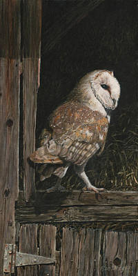 Barn Wood Painting - Barn Owl In The Old Barn by Dreyer Wildlife Print Collections