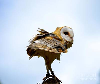 Photograph - Barn Owl by Johanne Peale