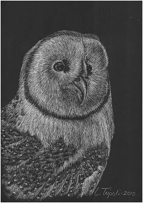 Pen And Ink Of Barn Drawing - Barn Owl by Lawrence Tripoli