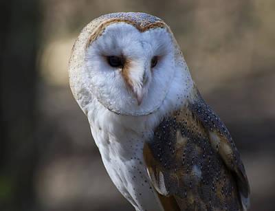 Barn Digital Art - Barn Owl Portrait by Chris Flees