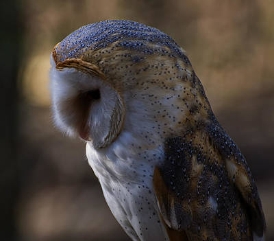 Barn Digital Art - Barn Owl Profile 2 by Chris Flees