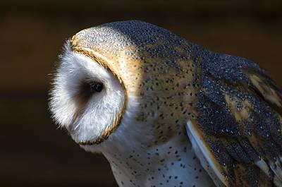 Barns Digital Art - Barn Owl Profile by Chris Flees