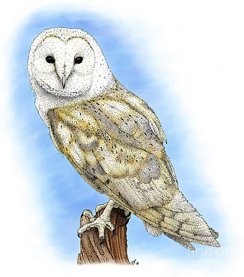 Photograph - Barn Owl by Roger Hall