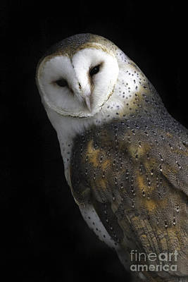 Tim Moore Photograph - Barn Owl by Tim Moore