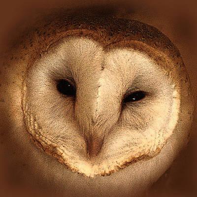 Photograph - Barn Owl by TnBackroadsPhotos
