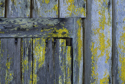 Photograph - Barn Ruin With Lichen by John Farley