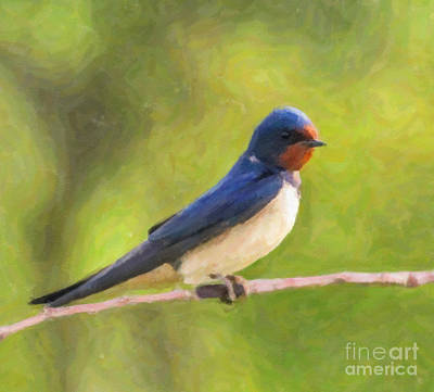 Barn Swallow Print by Liz Leyden