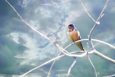 Photograph - Barn Swallow On Blue Green Sky by Julie Magers Soulen