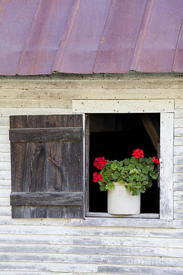 Photograph - Barn Window Geraniums by Alan L Graham