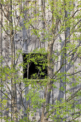 Photograph - Barn Window In Spring by Alan L Graham
