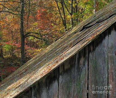 Photograph - Barn Wood by Fred  Sheridan