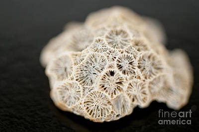 Photograph - Barnacles On An Old Seashell by Wilma  Birdwell