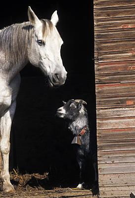 Grey Horse Photograph - Barnyard Buddies by Latah Trail Foundation