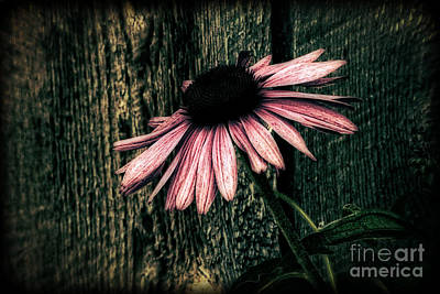 Art Print featuring the photograph Barnyard Coneflower by Marjorie Imbeau