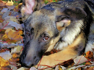 Photograph - Baron In The Leaves by Karol Livote