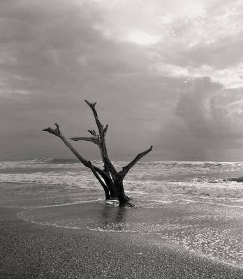 Photograph - Barony Beach Morning by Deborah Smith