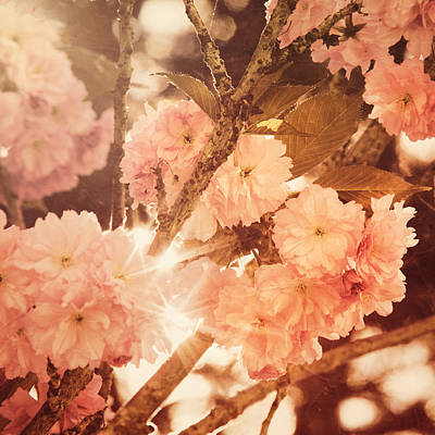 Susann Serfezi Photograph - Baroque Spring by AugenWerk Susann Serfezi
