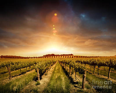 Art Print featuring the photograph Barossa Vineyard by Boon Mee