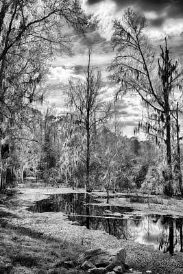 Art Print featuring the photograph Barr Hammock Preserve  by Howard Salmon