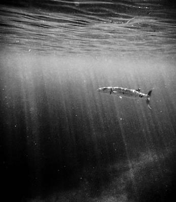 Photograph - Barracuda by Tyler Lucas