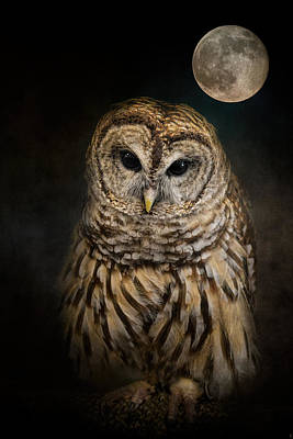 Photograph - Barred Owl And The Moon by Jai Johnson