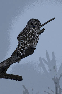 Barred Owl Art Art Print by Jodi Pflepsen