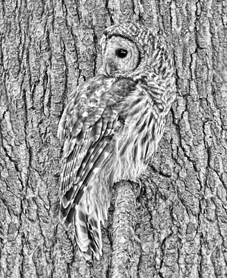 Photograph - Barred Owl Black And White by Jennie Marie Schell