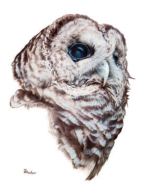 Drawing - Barred Owl by Brent Ander