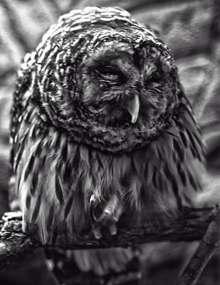 Photograph - Barred Owl by Chris Flees