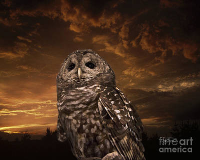 Photograph - Barred Owl  by Cris Hayes