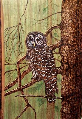 Pyrography Pyrography - Barred Owl by Danette Smith
