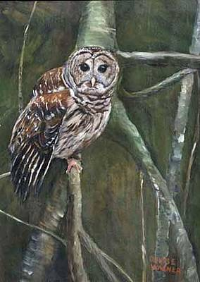 Painting - Barred Owl by Denise Wagner