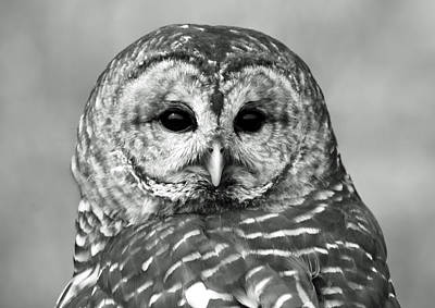 Photograph - Barred Owl In Black And White by Richard Bryce and Family
