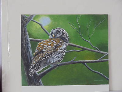 Painting - Barred Owl by James Lawler