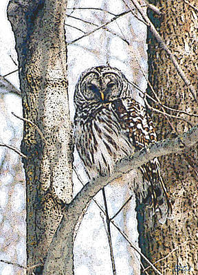 Photograph - Barred Owl by Jon Lord