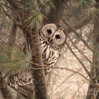 Wall Art - Drawing - Barred Owl by Laurie Musser