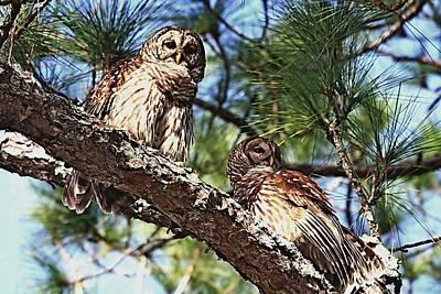 Photograph - Barred Owl Pair by Ira Runyan