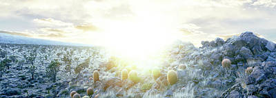 National Preserves Photograph - Barrel Cactus And Joshua Trees by Panoramic Images