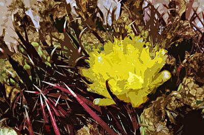 Barrel Cactus Bloom Print by Jack McAward