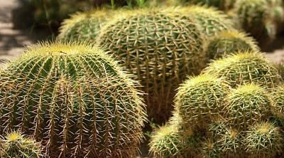Barrel Cactus Photograph - Barrel Cactus by Gilbert Artiaga