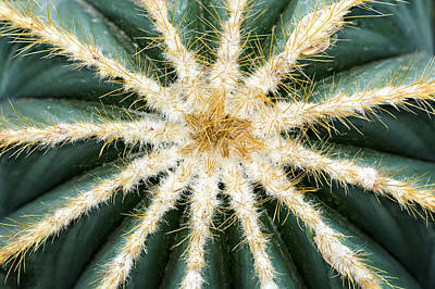 Photograph - Barrel Cactus Top by Mary Jo Allen