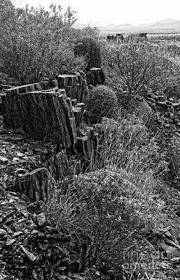 Photograph - Barrel Cactus Trail In Black And White by Lee Craig